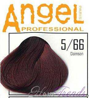 Angel professional 5-66
